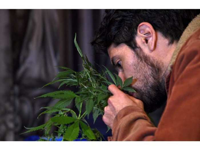 colombia-marijuana-medicine-health